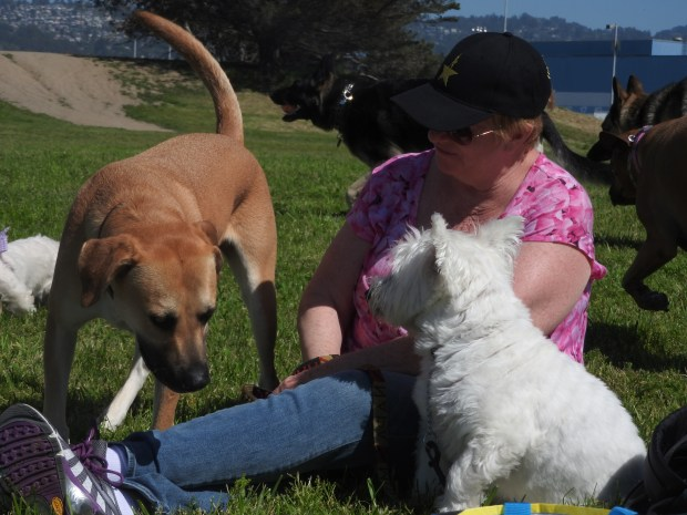 Eileen Cuff and her Westie named Wally welcome an outsider to an April 2 social gathering of West Highland White Terriers at Point Isabel Regional Shoreline in in Richmond.