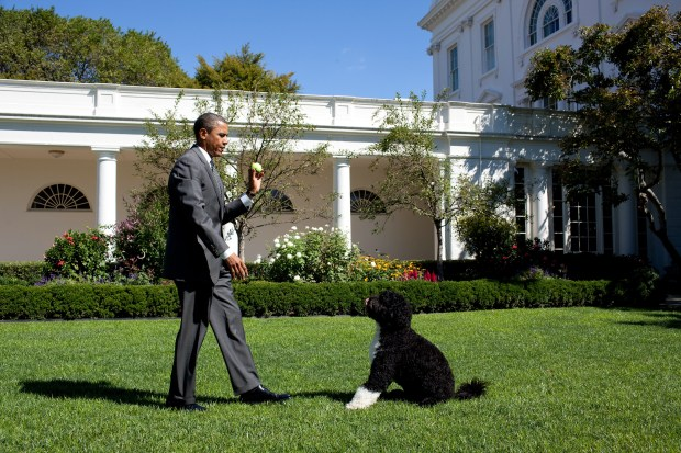 WASHINGTON - SEPTEMBER 09: In this handout image provided by the White House, U.S. President Barack Obama throws a ball for Bo, the family dog, in the Rose Garden of the White House September 9, 2010 in Washington, DC. (Photo by Pete Souza/The White House via Getty Images)