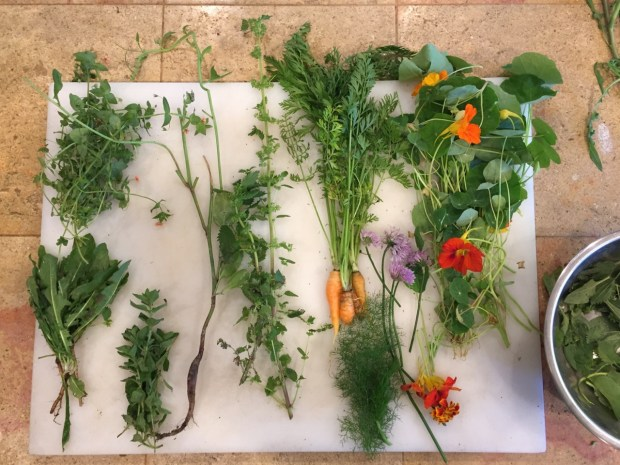 Wild edible weeds, clockwise from top left: chickweed, nettle, thumbelina carrots, nasturtium, chamomile flowers, wild fennel, oregano, dandelion greens. (Courtesy of Devika G. Bansal)