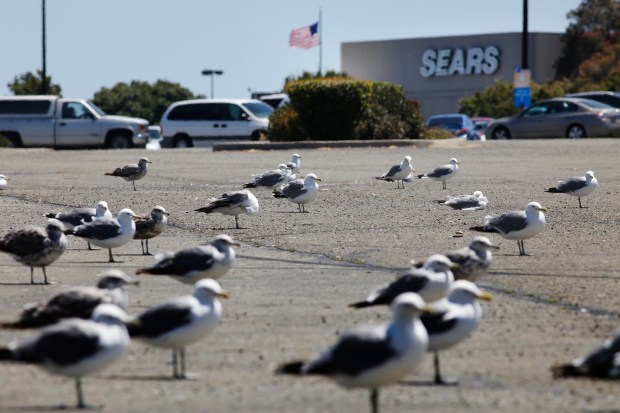 A flock of seagulls use the outer parking area as a resting spot at Hilltop Mall in Richmond, Calif., on Thursday, July 20, 2017. While some indoor malls are booming, like Valley Fair in San Jose, many are struggling. (Laura A. Oda/Bay Area News Group)