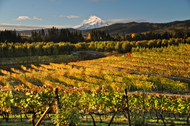 Vineyards in the Hood River Valley (Dave Radcliffe with the Columbia Gorge Winegrowers Association)