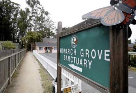 Monarch Grove Sanctuary in Pacific Grove. (Vern Fisher - Monterey Herald file)