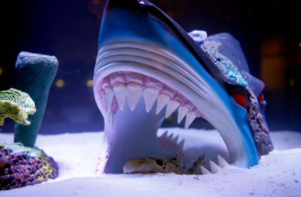 Pizarro the shark tank gets an actual shark tank for Shark fish tank