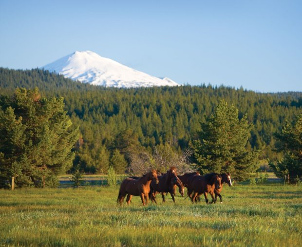 Horses from Sunriver Stables frolic in a field. (Sunriver)