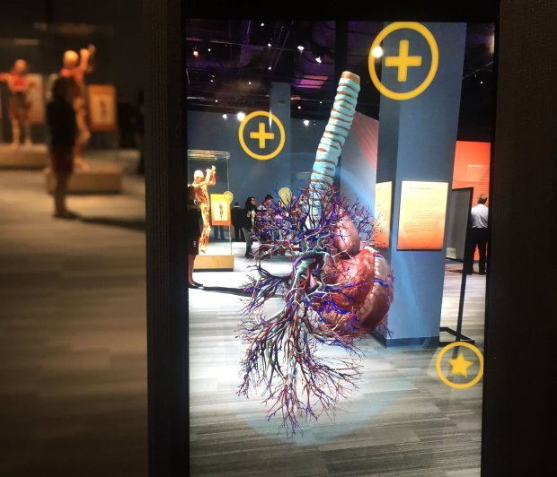 "Visitors can see augmented reality images of human anatomy, like this humanheart, using a ""fablet"" at ""Body Worlds Decoded,"" a new exhibition at the Tech Museum of Innovation. (Sal Pizarro/Bay Area News Group)"
