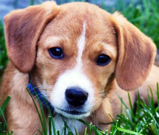 K. Lotoszynski/Valley Humane SocietyPoppy is the Valley Humane Society's pet of the week.