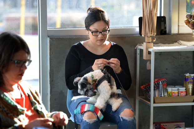 Therese Gorostiza, of Vallejo, knits something for her dog Brody at The Black Squirrel yarn and fabric store in Berkeley, Calif., on Thursday, Nov. 30, 2017. The store started out as a pop-up retail business to test out the concept and was so successful that the owner decided to sign a lease in the same space as the pop-up. (Dan Honda/Bay Area News Group)