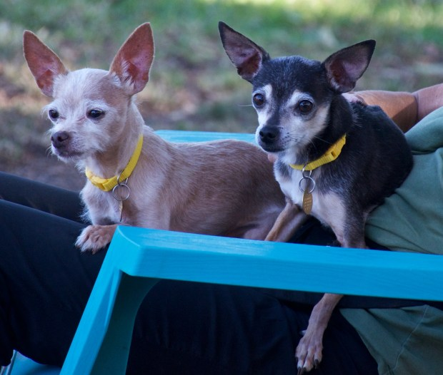 Jasper, left, and Porter, right, are the East Bay SPCA's pets of the week.