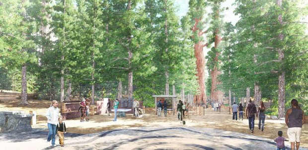An artistic rendering of the new entrance to Yosemite's Mariposa Grove ofGiant Sequoias, part of a multiyear restoration that is set to be complete in early spring (Photo: Mithun Architects)