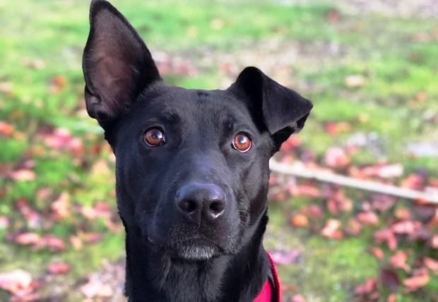 M. Metzler-Ghofranian/Valley Humane SocietyVerdant is the Valley Humane Society's pet of the week.