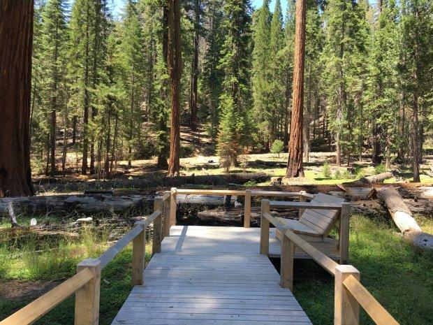 New boardwalks are part of the restoration of Mariposa Grove in YosemiteNational Park (Romina Pasten/Yosemite Conservancy)