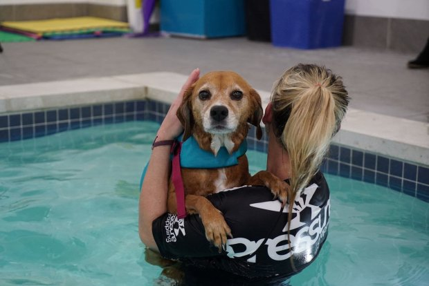 Kelly Coupe, the head swim coach at K9 Aquatic Center, with Ditto. Ditto'sowners say swimming has helped her recover from major back surgery. MUST CREDIT: Washington Post photo by Patrick Martin.