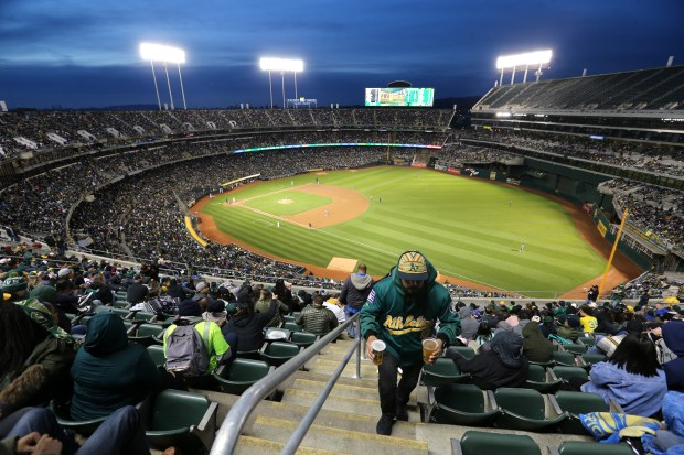 A fan carries a couple glasses of beer as finds his seat in the 300s section of the Oakland-Alameda County Coliseum during the Oakland Athletics and the Chicago White Sox game in Oakland, Calif., on Tuesday, April 17, 2018. The A's celebrated its 50th Anniversary game. (Ray Chavez/Bay Area News Group)