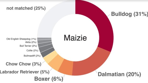A DNA test revealed Maizie's very mixed heritage. MUST CREDIT: Darwin'sDogs.