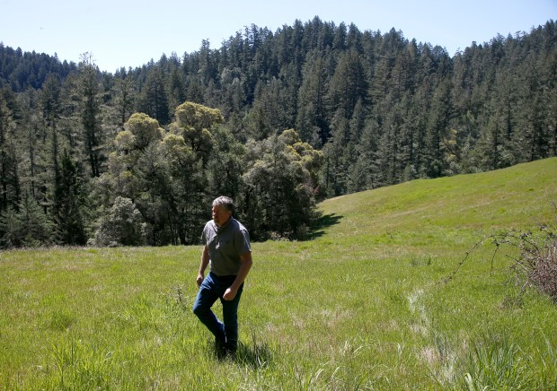 Forester Todd McMahon walks in a meadow among the largest privately-held stand of old-growth redwoods in the world, north of Cazadero, Calif., Tuesday, April 17, 2018. Save-the-Redwoods League is completing an $18.1 million deal to buy 730 acres of land that has been in the Richardson family for generations. (Karl Mondon/Bay Area News Group)