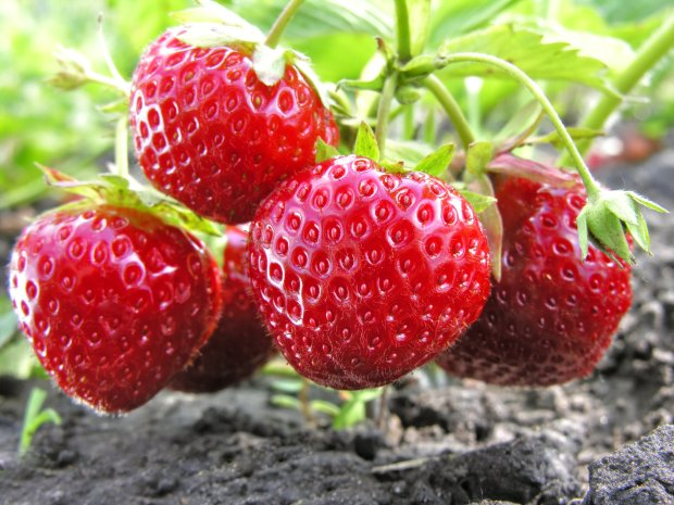 Fresh strawberries add spring sprightliness to any dish, sweet or savory.(Thinkstock)