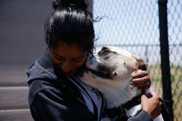 Toby licks staff member Mary-Ann Fernandes' face at Peninsula Humane Society's Coyote Point Shelter in San Mateo on Tuesday, June 19. (Maritza Cruz/ Bay Area News Group)