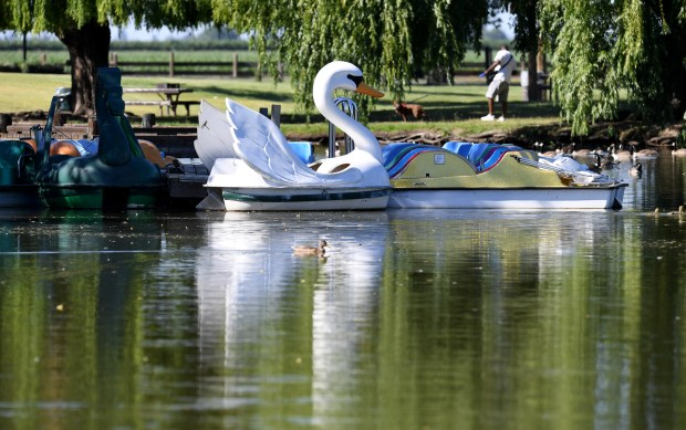 A swan paddle boat is photographed at Oak Grove Regional Park in Stockton, Calif., on Wednesday, June 13, 2018. (Doug Duran/Bay Area News Group)