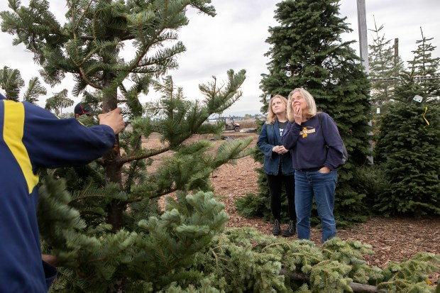From Right Jenefer Curtis And Her Daughter Eleanor Curtis Of San Jose Consider A Christmas Tree At Territos Christmas Trees In San Jose California
