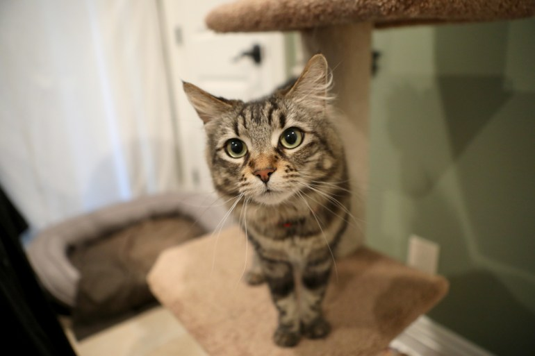 Image result for rent apartment for cats