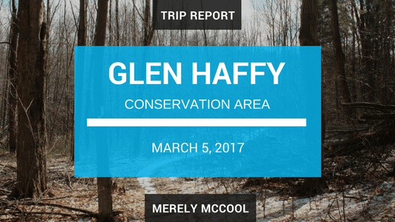 Trip Report: Hiking in Glen Haffy Conservation Area