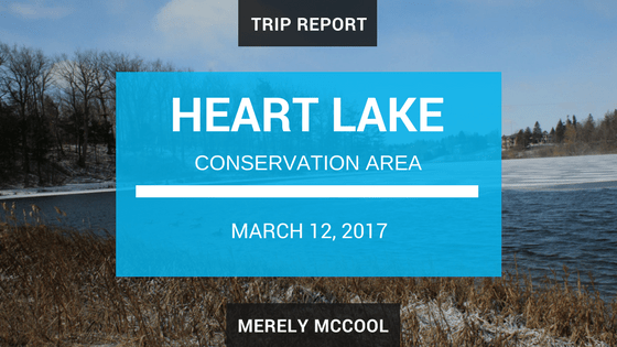 Trip Report: Hiking in Heart Lake Conservation Area
