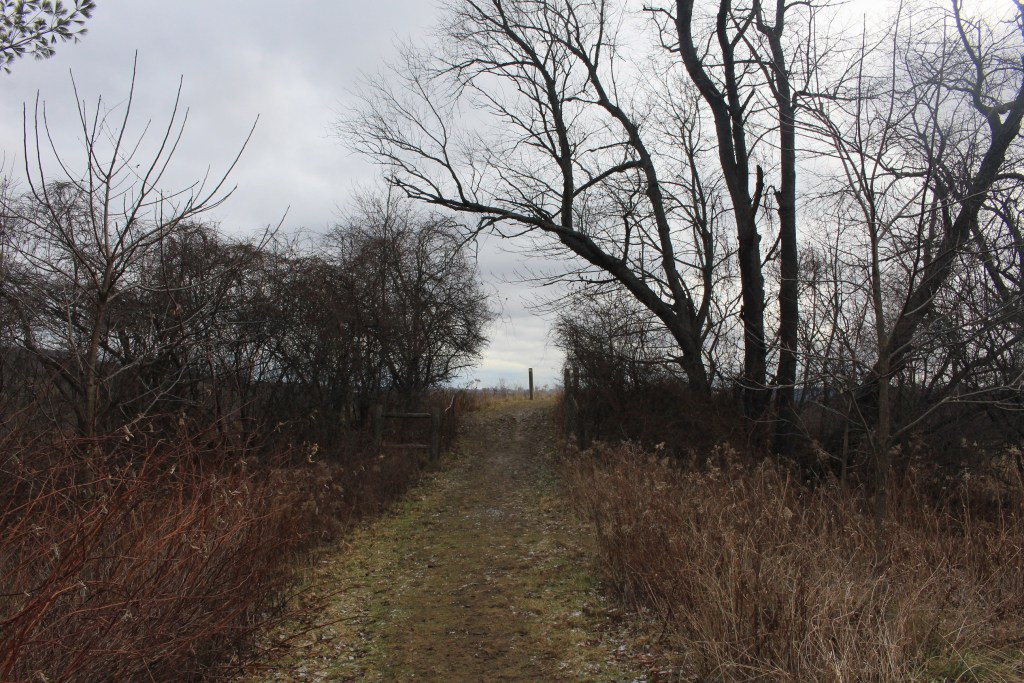 Hiking the Bruce Trail through Dundas Valley Conservation Area - Hamilton, Ontario - MerelyMcCool