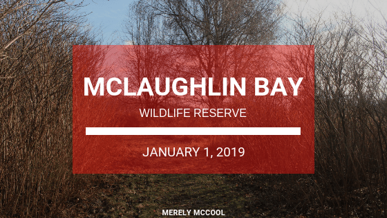 Hiking McLaughlin Bay Wildlife Reserve - Oshawa, Ontario - MerelyMcCool