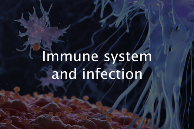 Immune system and infection