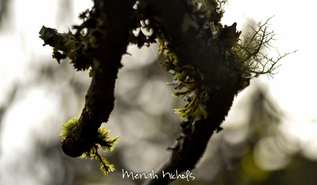 meriah nichols_-11