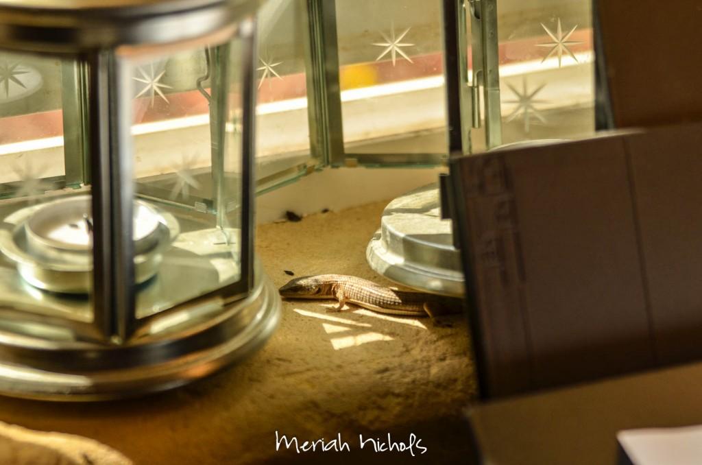 meriah nichols pho recipe september 2014 (32 of 20)
