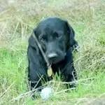 An Update on Kianna (My Hearing Dog)