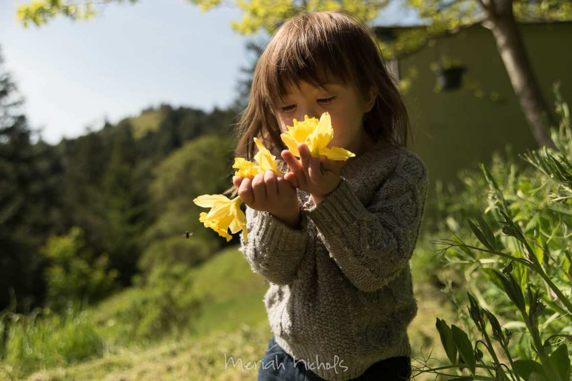 child with Down syndrome lifts yellow daffodils toward her face