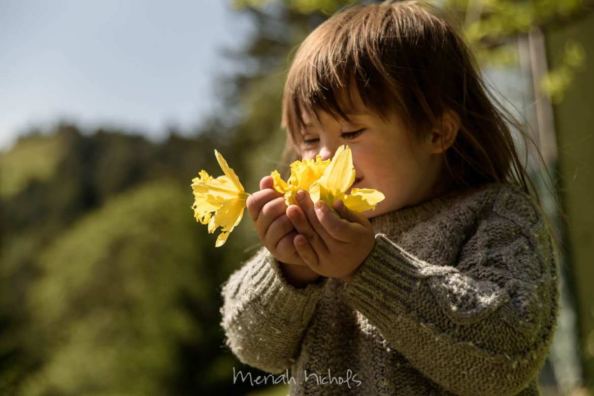 child with Down syndrome buries her nose in held yellow daffodils