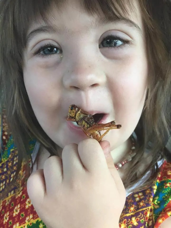 proud parenting moment! moxie trying a roasted grasshopper!