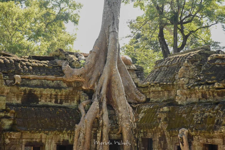 Meriah Nichols Ta Prohm Angkor Wat -24
