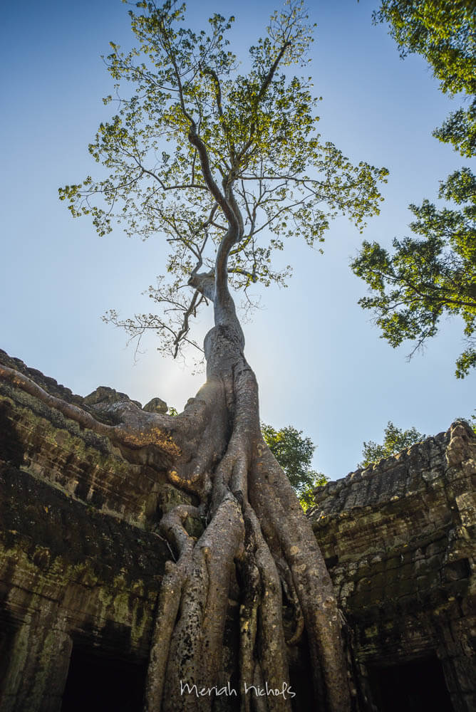 Meriah Nichols Ta Prohm Angkor Wat -25