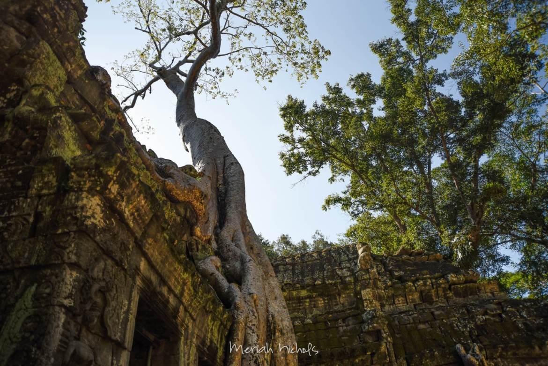 Meriah Nichols Ta Prohm Angkor Wat -27