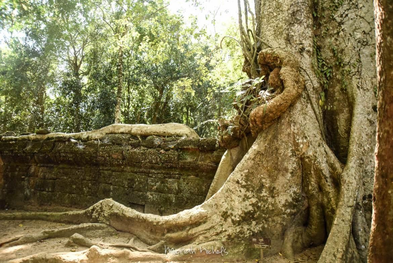 Meriah Nichols Ta Prohm Angkor Wat -4