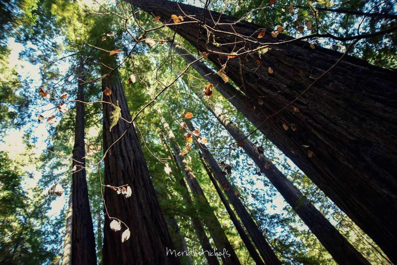 Meriah Nichols Redwoods-47