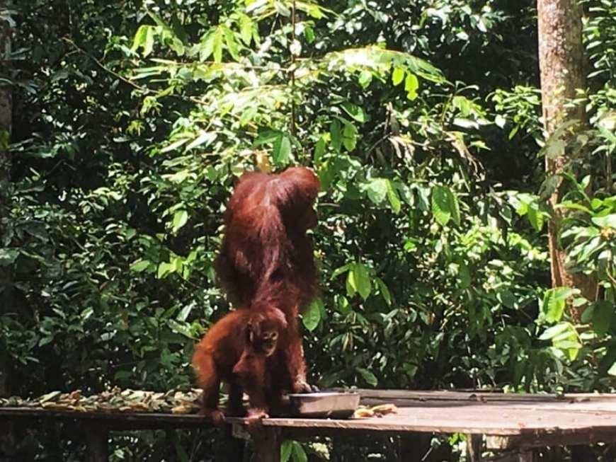 orangutanes_Tanjung Puting