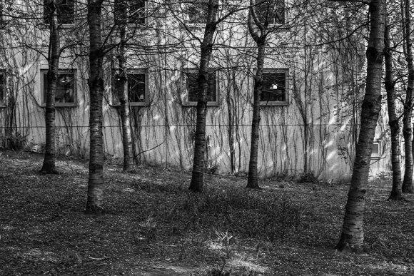 skog-hus-medis-sv-v