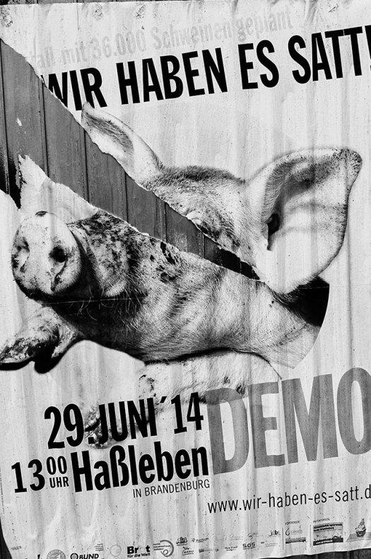 Pigs-losing-space-#1-(1-av-1)
