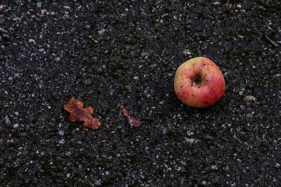 äpple-o-eklöv