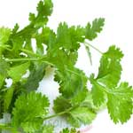 Coriander-Leaves-हरा-धनिया-Hara-Dhaniya-Spices-Names-in-English-Hindi-Meri-Rasoi