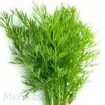 Dill-Leave-सुवा-भाजी-सोया-suva-bhaji-soya-Spices-Names-in-English-Hindi-Meri-Rasoi