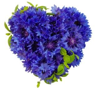 Mint-Flower-Heart_Meristem_Edible_Botanicals_Micro_herbs_edible_flowers