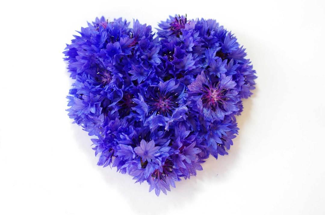 cornflower-edible-flowers