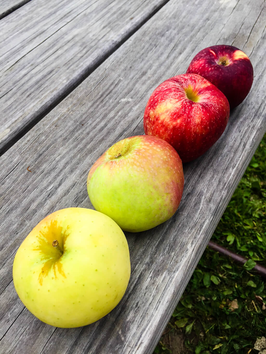Color Inspiration Apple Orchard