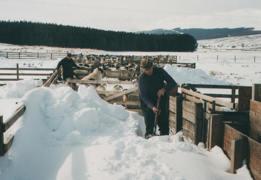 Highland shepherds in snow